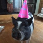 Lucile Hamm Robbins - @thelifeoflucythepig - Instagram