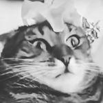 Lucindahilton@gmail.com - @lucindahilton53 - Instagram