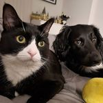 Lupin & Dudley - @lupnduds - Instagram