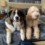 Mabel & George Shapiro - @mabelthemysterymuttandgeorge - Instagram