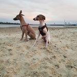 Mabel and Walter Milligan - @mabel_and_walt - Instagram