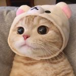 Kahn Marcia - @meow_m_cats - Instagram