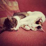 Minnie & Maggie Connor - @minnieandmaggie - Instagram