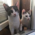 Finchen & Emmi - @finchenminnieandemmi - Instagram