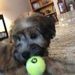 Nola Hammerschmidt - @nola_hammerschmidt_puppy - Instagram