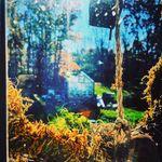 Pans Forest - @pansforest - Instagram
