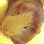Emery Penelope And Panda - @piggymomma11 - Instagram