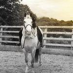 Phoebe Godwin - @rap_equine - Instagram