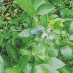 Phoebe Root - @that_arteeest - Instagram