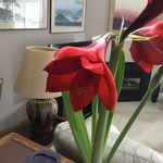 Rose Marie Wydryk Cosby - @rosemariecosby - Instagram