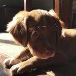 Rudy Selah Dudley Char Toby - @pettypatenaudes - Instagram