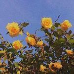Sophia Sizemore - @sphere_mint - Instagram