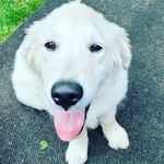 Susie mckinley - @susie_mckinley_ - Instagram