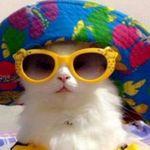 🍄Tabatha Foreman🍄 - @tabby_cat.18_ - Instagram