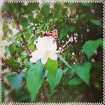 Tabatha S. Foreman - @blaq.ballatgriffin - Instagram