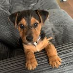 Otis The Patterdale Terrier - @otis_patterdale - Instagram