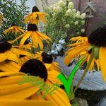Ursula Clemens - @ursulaclemens - Instagram