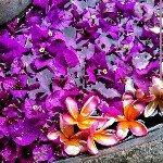 Virginia Keenan - @virginiakeenan349 - Instagram
