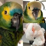 Becky Wilde Dudley - @hermes_the_parrot_and_friends - Instagram