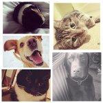 Amber,Tigs,Dudley,Casey,Winnie - @amberandtigger - Instagram